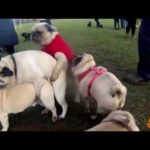 Dogs Doing The Conga