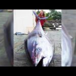 This Fish Is Worth Over $3 Million Dollars