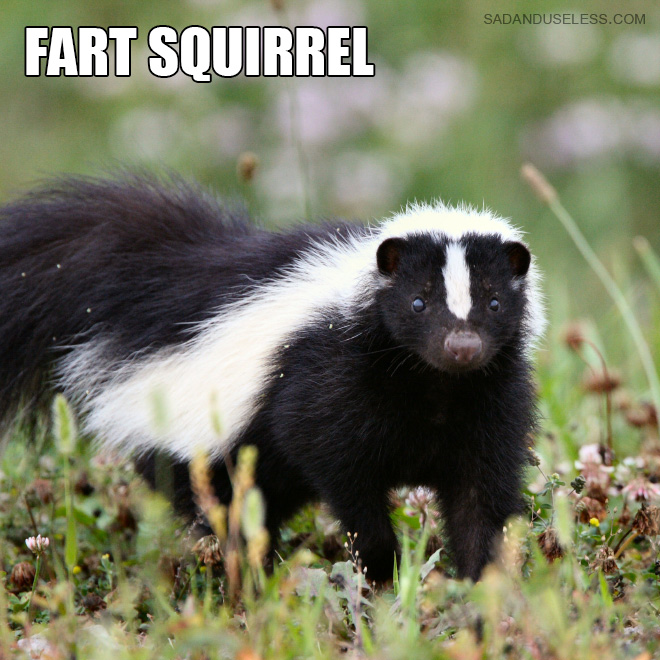 This is definitely a better animal name.