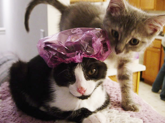 Is there anything cuter than a cat? Yep, a cat in a shower cap!