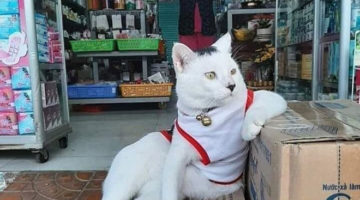 cats-in-small-shops4