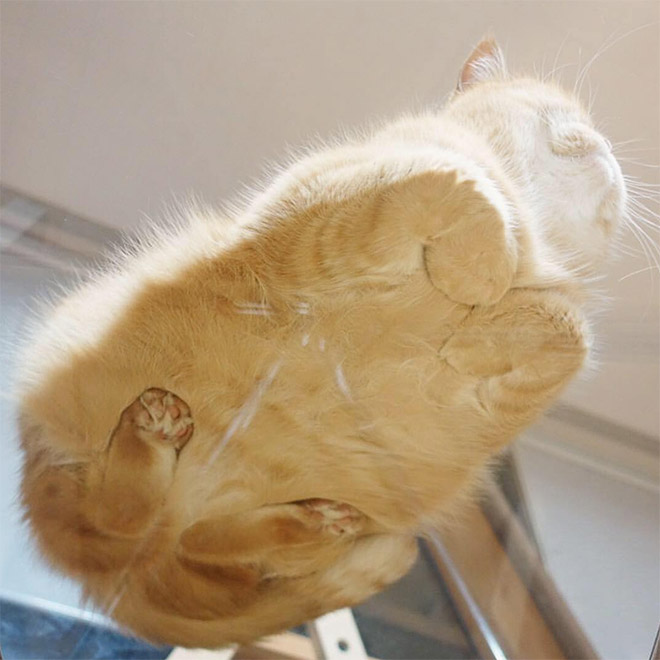 Cat on glass table.