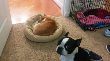 cats-vs-dog-beds2