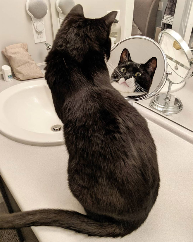 Cat trying to figure out a mirror.