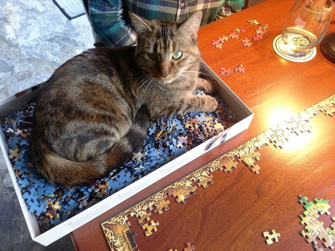 Cat helping to solve a puzzle.