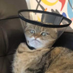 Poor Pets That Had To Wear The Cone Of Shame
