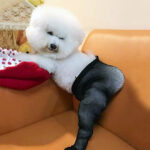 So You Can Now Buy Fishnet Stockings For Your Dog…