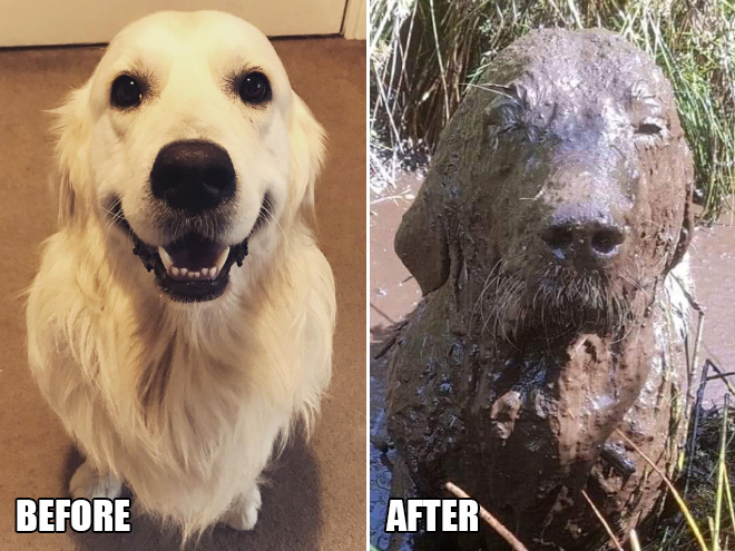 Before and after playing in the mud.