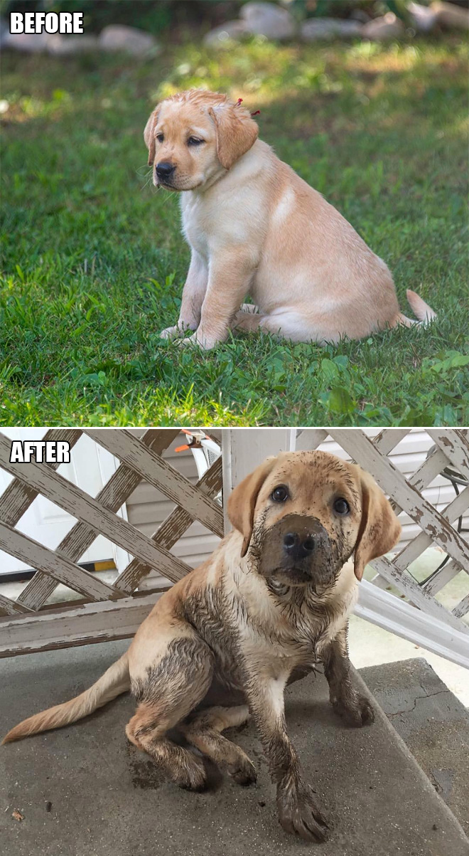 Before and after playing in mud.