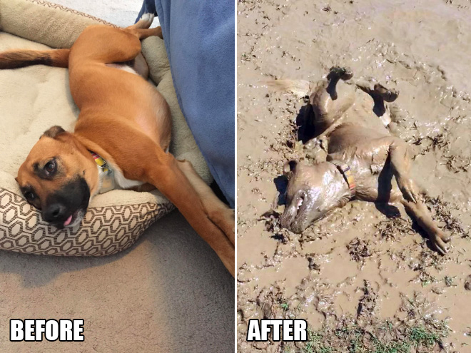 Before and after finding mud.