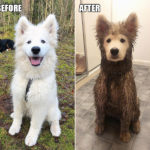 Why You Shouldn't Let Your Dog Play In The Mud