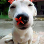 If You're Having a Bad Day, Take a Look at These Pictures of Dogs Enjoying Flowers