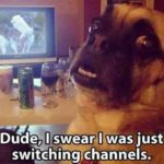 Hilariously Funny Pictures