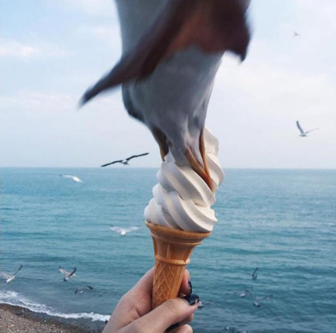 Seagull stealing food.