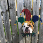 This Bulldog Loves Watching The Street Through a Hole, So Owner Painted Costumes On The Fence