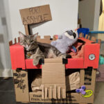 Bored Quarantined People Have Started Building A**hole Forts For Their Cats