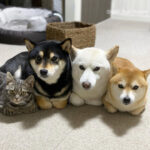 """This Adorable Cat Feels And Acts Like He's Not Any Different From His """"Brothers"""""""