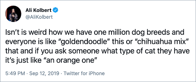 """Isn't is weird how we have one million dog breeds and everyone is like """"goldendoodle"""" this or """"chihuahua mix"""" that and if you ask someone what type of cat they have it's just like """"an orange one"""""""