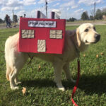 Poop Factory: The Best DIY Halloween Costume For Your Dog