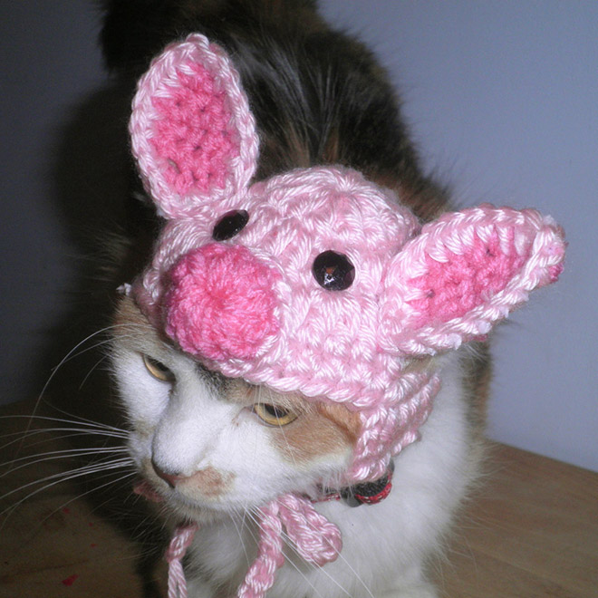 Funny crocheted pet hat.