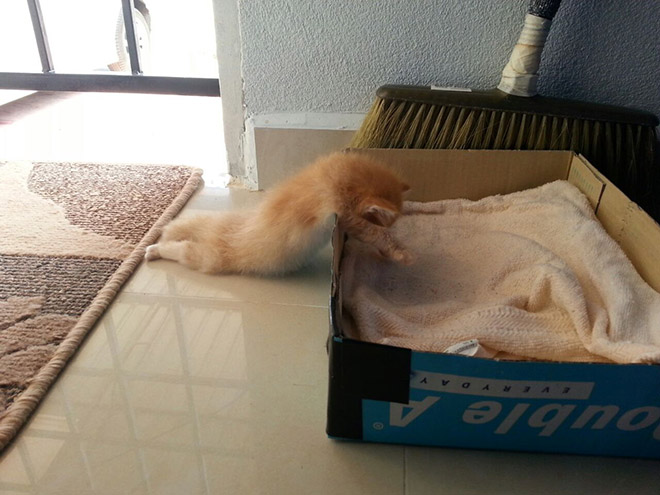 Cats can fall asleep anywhere.