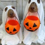 Terrifying Gallery of Ghost Dogs