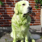 Dogs After Playing In Freshly Cut Grass