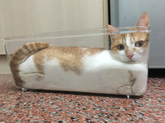 Proof that cats are actually liquid.