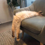 People Are Sharing Pics of Their Long Cats