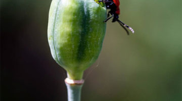 lovemaking-insects8