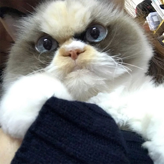 The new Grumpy Cat.