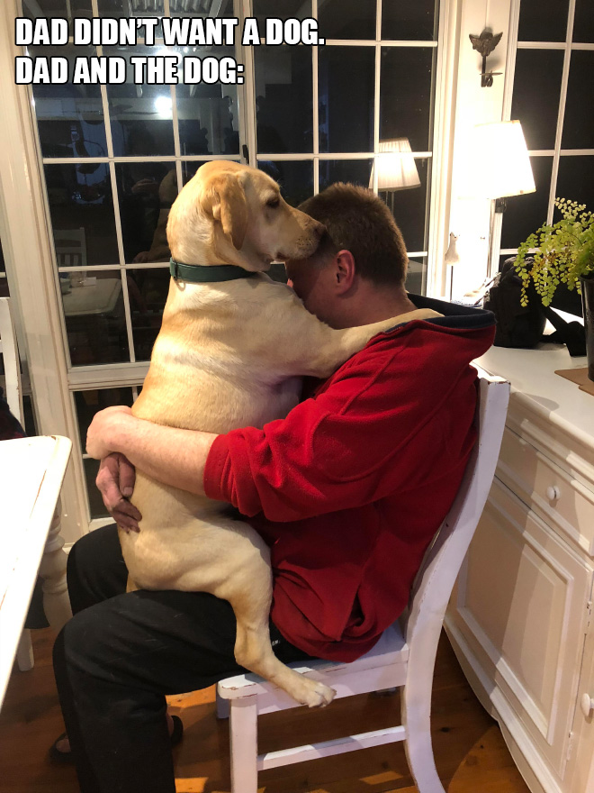 Dad didn't want a dog. Dad and the dog: