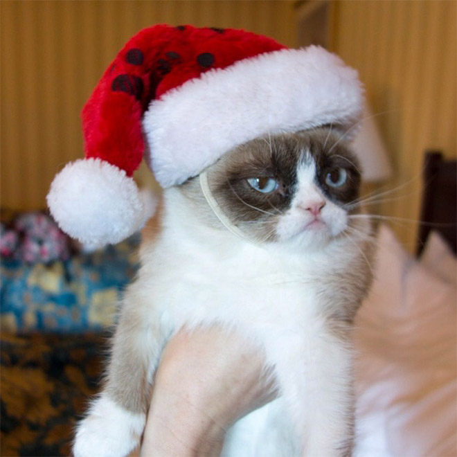 Not in a Christmas mood.