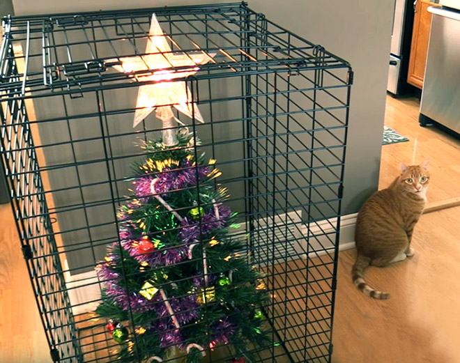Protecting the Christmas tree from pets.