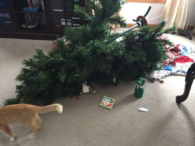 Pets really like to pick fights with Christmas trees.