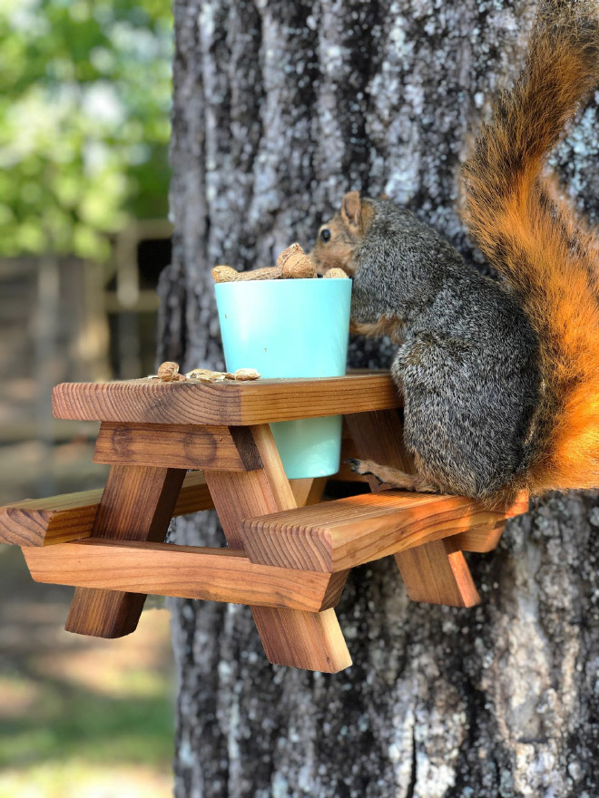 Picnic table style squirrel feeder.