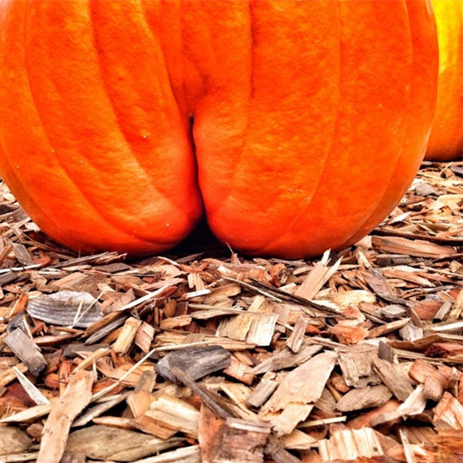 Pumpkin that looks like a butt.