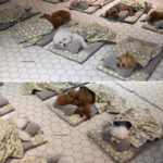 Photos of Sleeping Puppies In a Puppy Daycare Center Are Taking Over The Internet