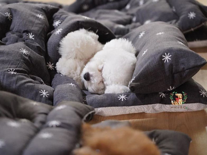 Sleepy time at a puppy daycare.