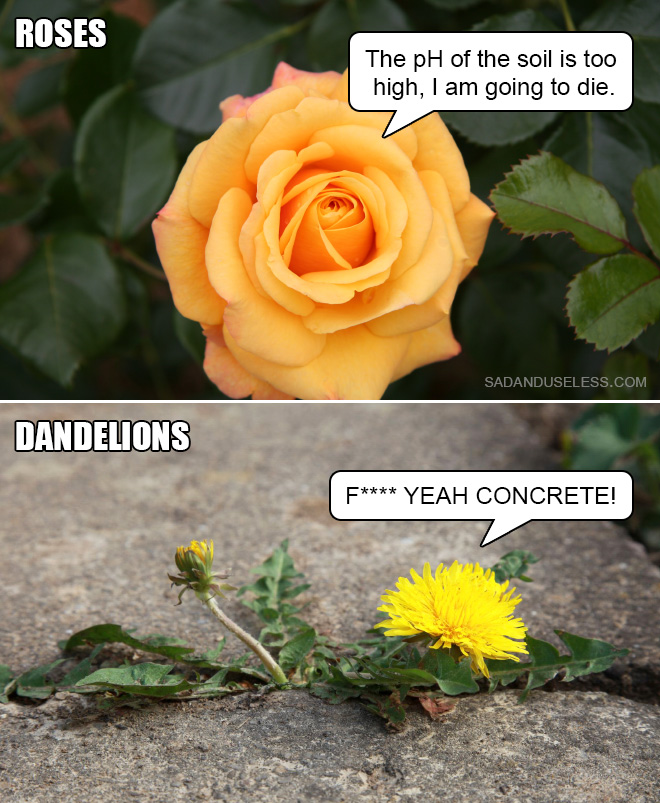 Not all flowers are the same. Actually they are quite different.