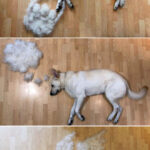 """People Share How Much Their Dogs Shed In a Now Viral """"Shedding Dog Challenge"""""""