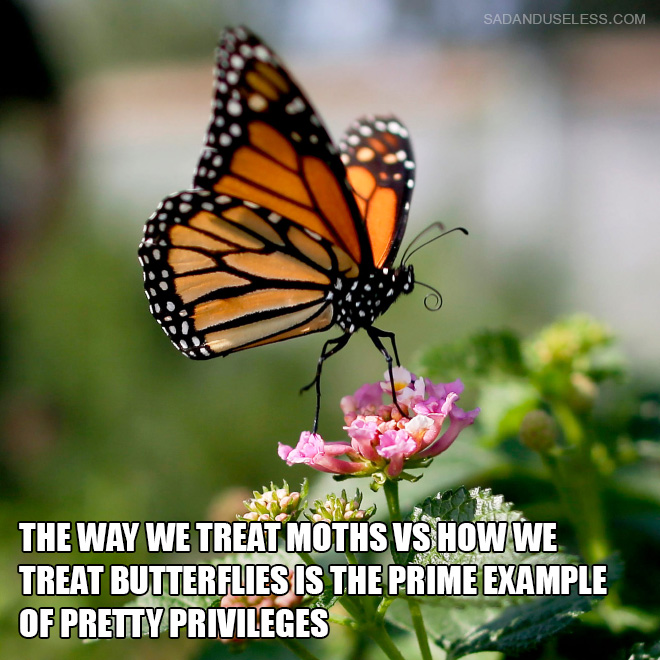 The way we treat moths vs how we treat butterflies is the prime example of pretty privileges.