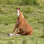 Did You Know That Some Horses Sit Like Dogs?
