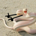 People Are Doodling On Snake Pics, And The Result Is Brilliant