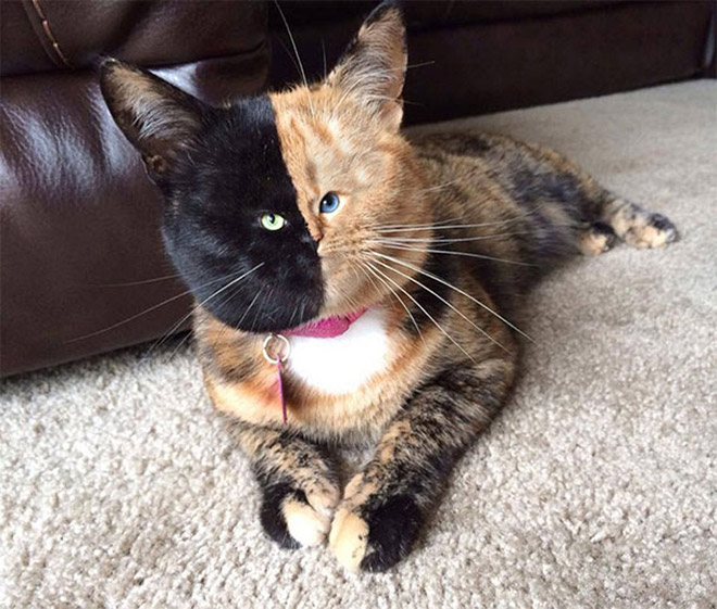 Some cats have very tiny faces.