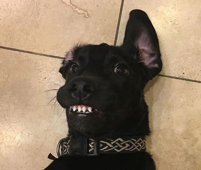 Adorable toofers.