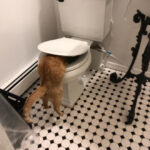 """The Funniest Cat Pics That Owners Uploaded For The """"Unflattering Cat Photo Challenge"""""""
