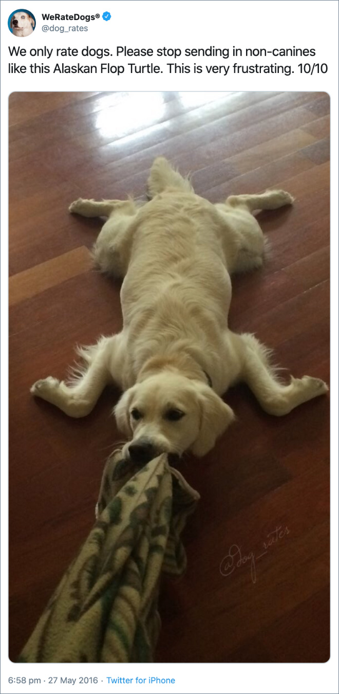 We only rate dogs. Please stop sending in non-canines like this Alaskan Flop Turtle. This is very frustrating. 10/10