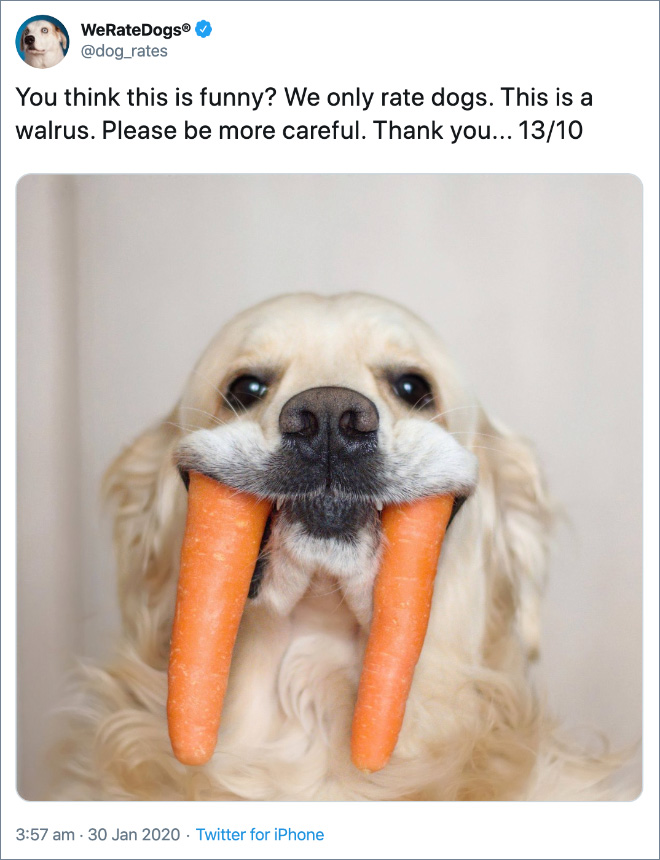 You think this is funny? We only rate dogs. This is a walrus. Please be more careful. Thank you... 13/10