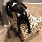 """""""What's Wrong With My Cat?"""" Online Group Has Owners Posting Pics of Their Malfunctioning Cats"""
